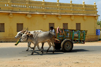Colourful ox carts