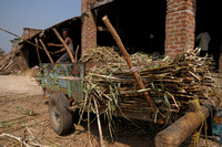 Arriving Raw Material -Sugar cane